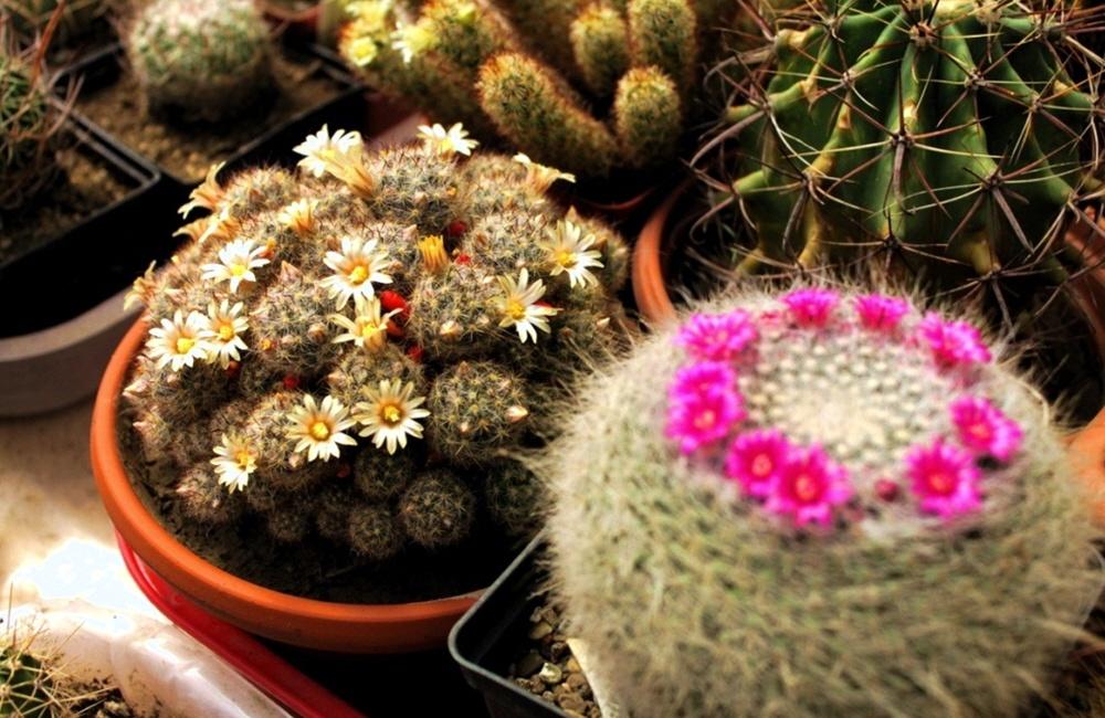 Магазин кактусов и суккулентов