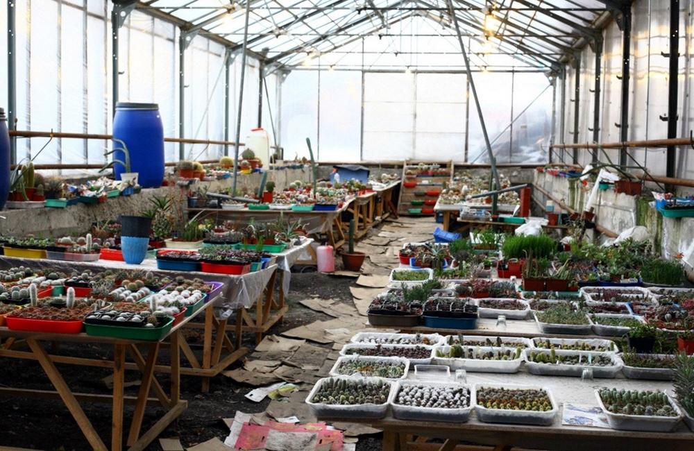 Теплица для выращивания кактусов