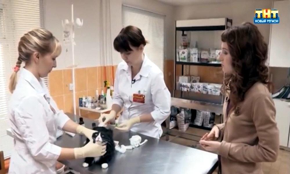 Бизнес на лечении животных
