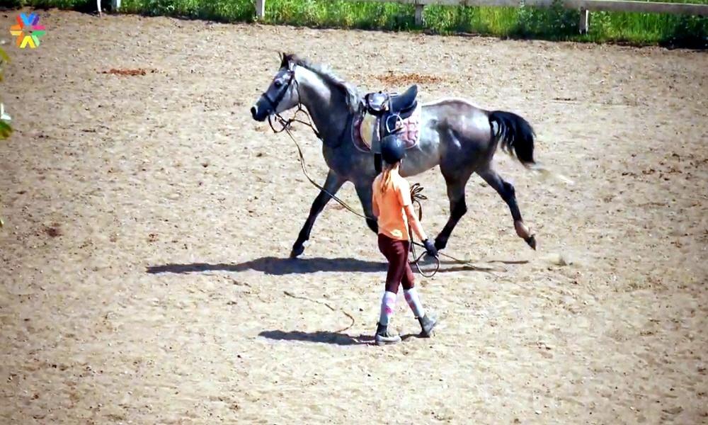 Развитие конного спорта в России