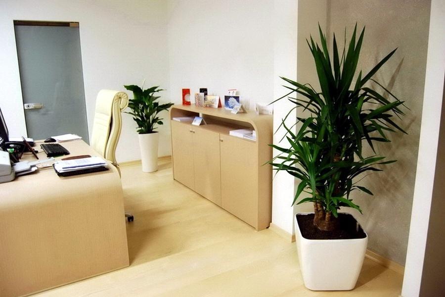 Бизнес на озеленении_офисов