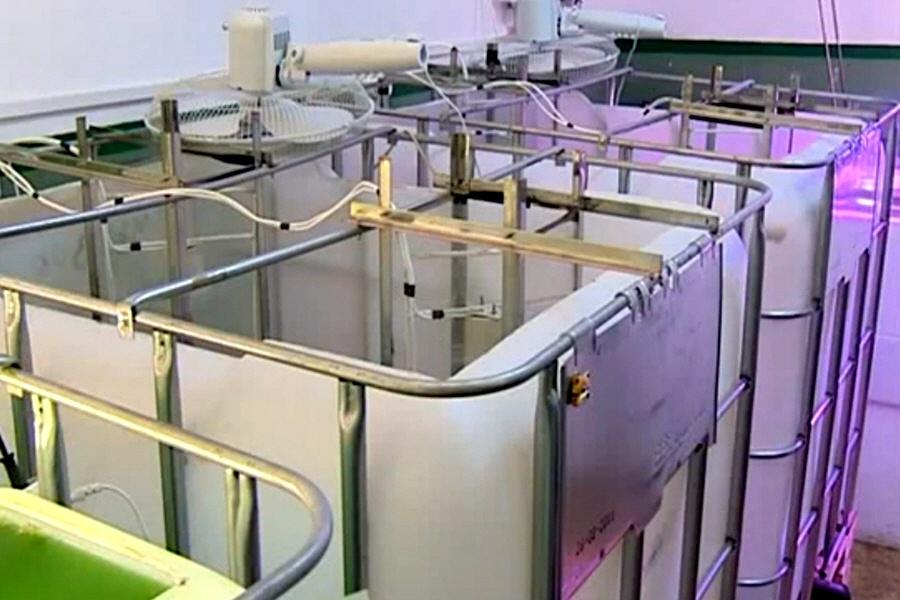 Биотехнологическое производство